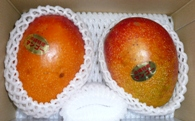 Oki31_mango